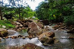 Gunung Pulai Forest